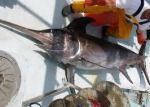 Swordfish (Xiphias Gladius). Photo Credit: world fishing.net