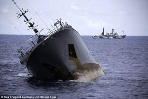 Image Credit: Sea Shepherd Global